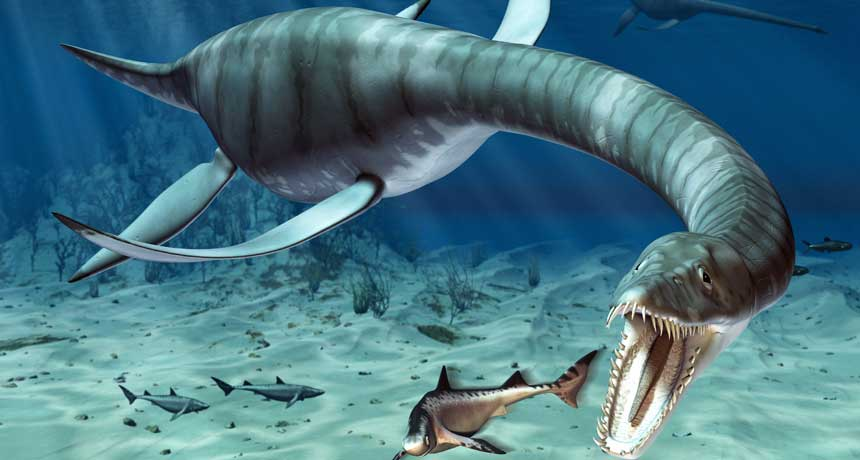 Dinosaurios Marinos Dinosaurio Info Los dinosaurios vivieron sobre la tierra durante unos 150 millones de años y no es sorprendente longitud: dinosaurios marinos dinosaurio info